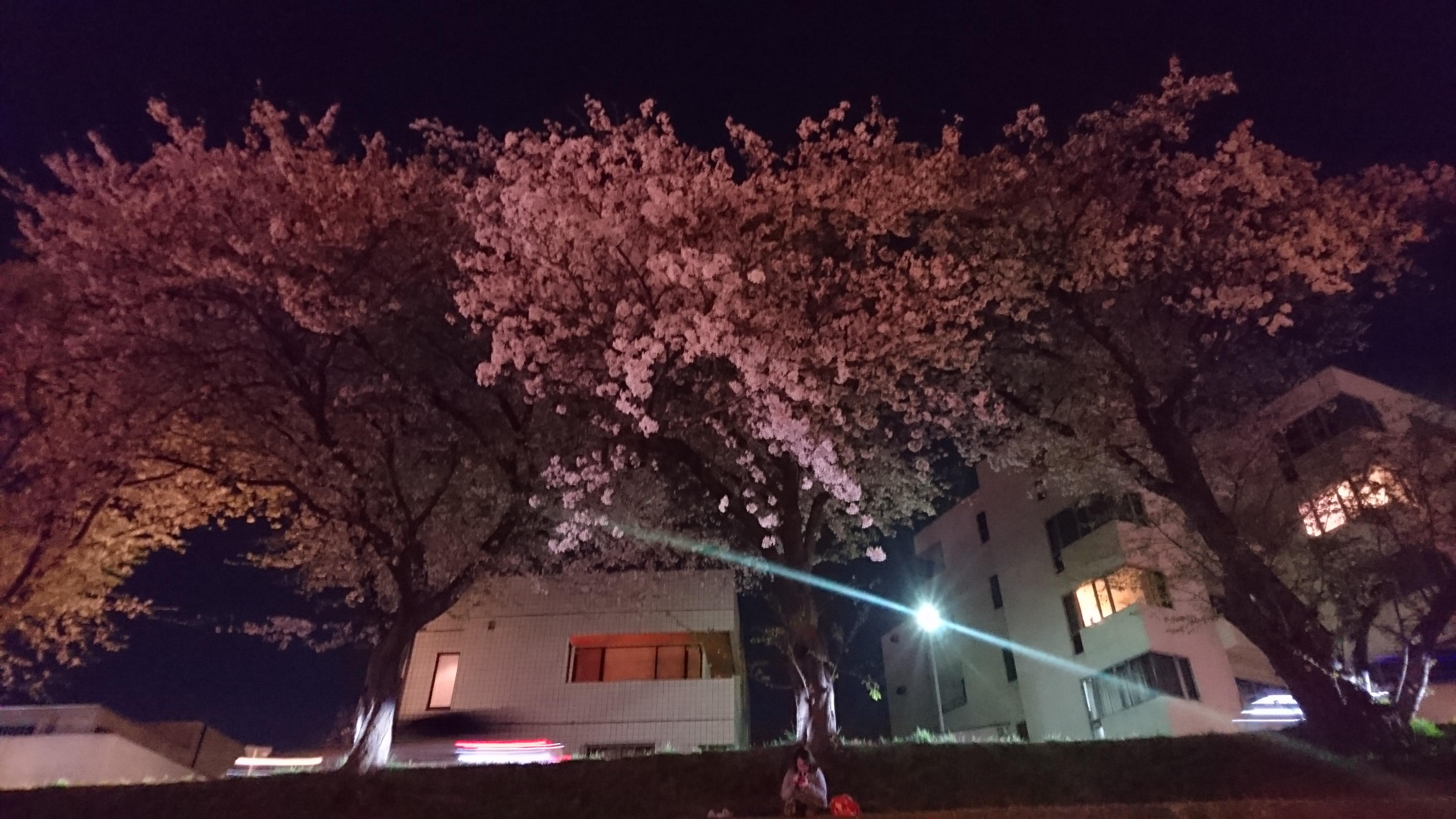 岡山、改築、改装、新築、中古、香川、リフォーム、リノベーション、修理、修繕、増築、桜、花見、